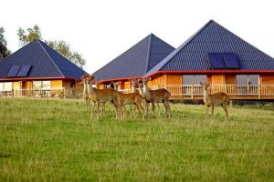 Cerza Safari Lodge (118.00 EUR)