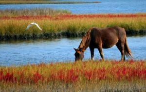 Wat je nodig hebt voor een weekendje weg met je paard
